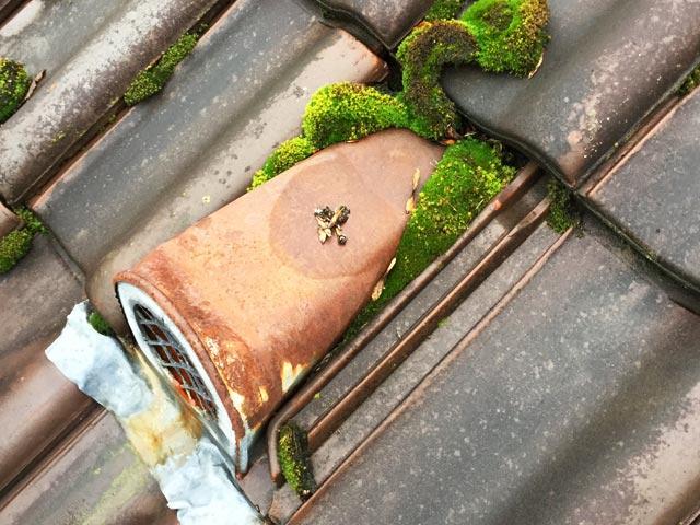 Dachwartungsexperte – Laub- und Moosansatz